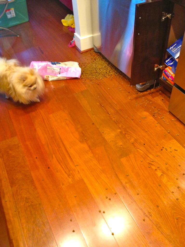 puppy food spilled