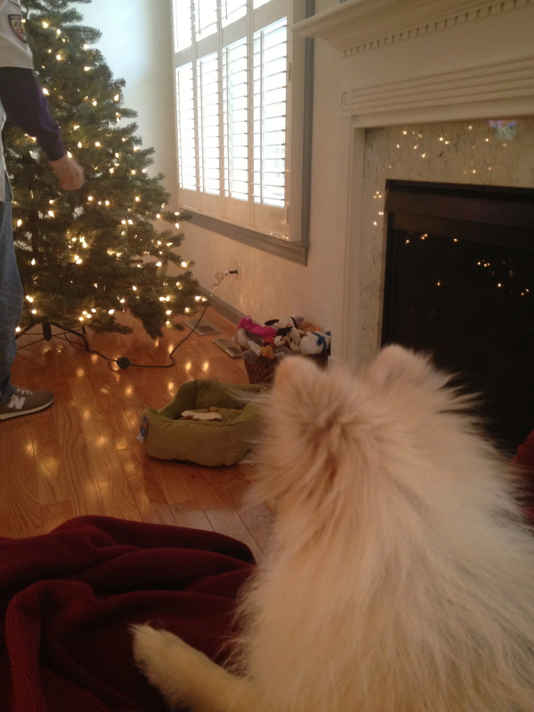 Phoebe watching the tree