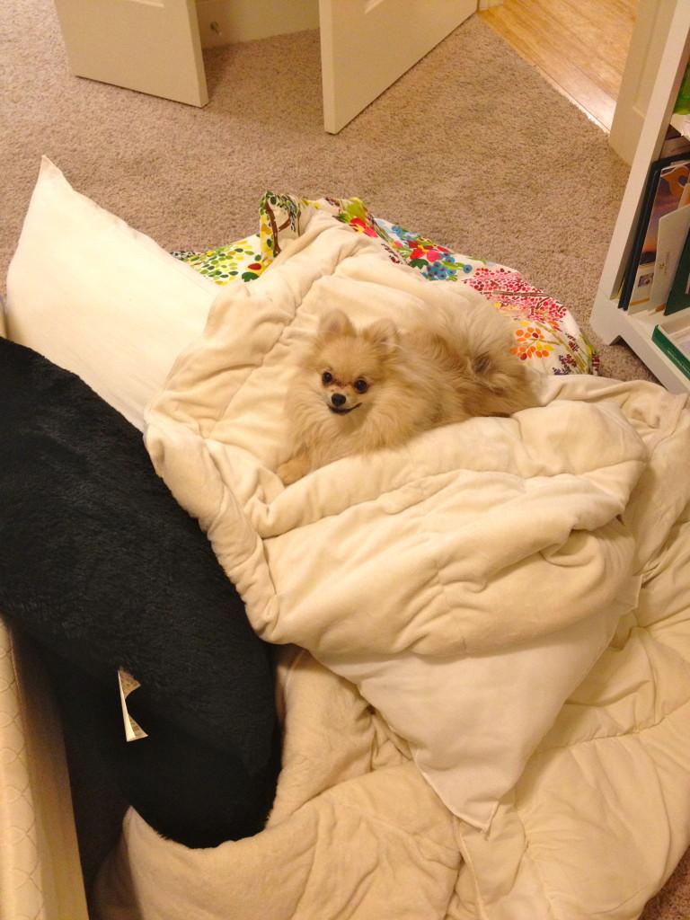 Ahhhh so comfortable...